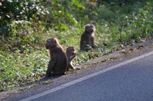 120116_Khao Yai National Park_Tajlandia (139)