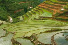Tarasy ryzowe wokol Sapy Wietnam (33)