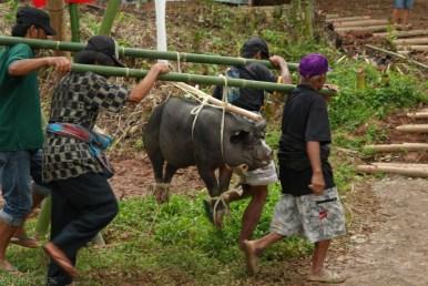 Tana Toraja Ceremonia pogrzebowa_Indonezja (19)