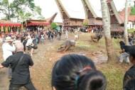 Tana Toraja Ceremonia pogrzebowa_Indonezja (27)