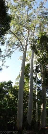 Roslinnosc na Fraser Island (4)