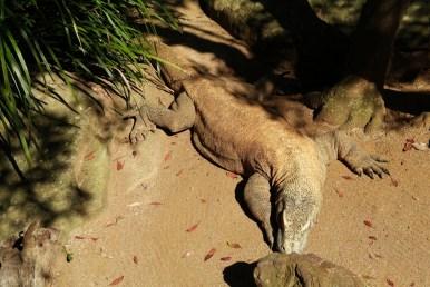 Zoo Sydney (6)