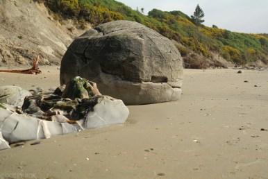 Wybrzeze Otago Moeraki Boulders (10)