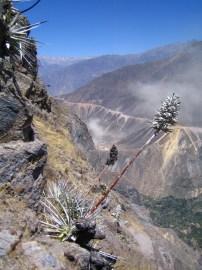 Kanion Colca (26)