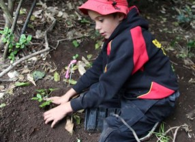Student plants koheriki in the Maitahi Scientific Reserve..