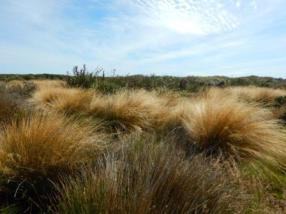 Crawse Creek wetland - a recent Nature Heritage Fund land purchase. Photo: DOC.
