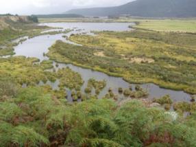 Oxbow wetland managed as a covenant on the Waiau River floodplain. Photo: H Robertson/DOC.