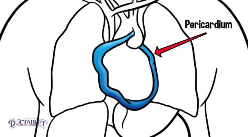 Pericardium function