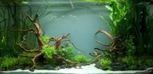 les bienfaits des Aquariums- 10eme Championnat d'Aquariophilie France 2013