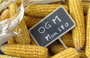 les aliments les plus cancerigenes - OGM