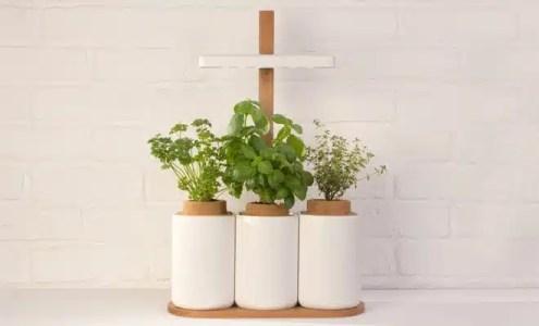 Lilo, le potager aromatique simple et ludique
