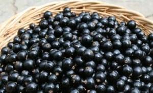 Bienfaits cassis fruit sante