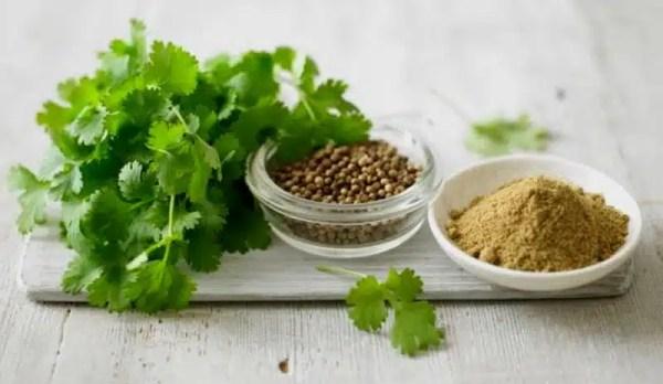 bienfaits coriandre herbes santé