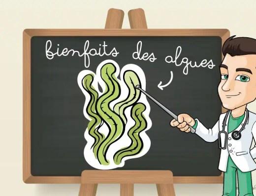 bienfaits algues nutrition sante