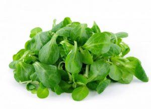 mâche en salade
