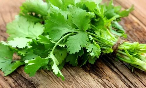 coriandre plante aromatique bienfaits