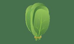 épinards frais saison