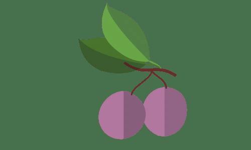 prunes saison