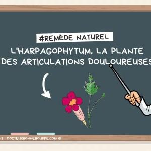 harpagophytum articulations douloureuses