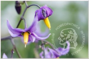 consultorio homeopatico hidalgo mexico