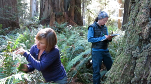 Dr. Fern and Marie Antoine finding fern paradise.