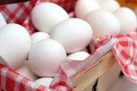 egg-2189986_1920