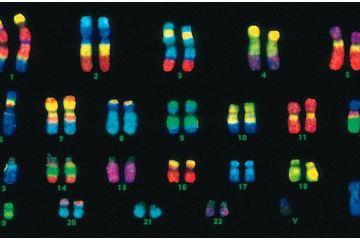 F14-10_FISH_chromosome