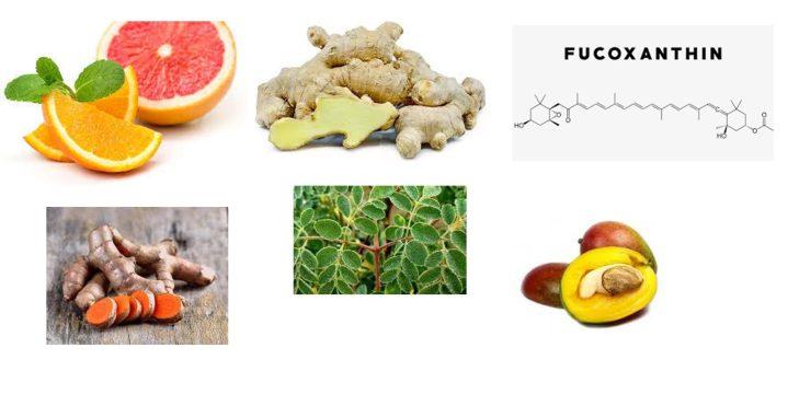 Meticore ingredients