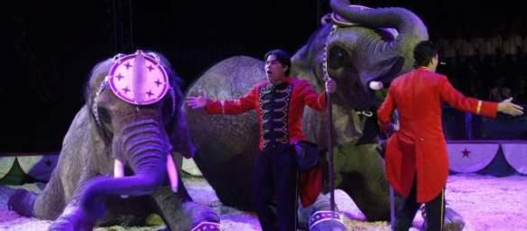 circos-animales-640x280-12062013