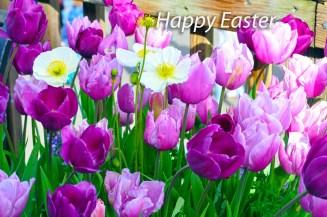happy-easter-tulips Public Domain