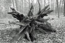 Forest art - Waldkunst I_2