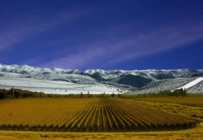 Viñedos de Mendoza