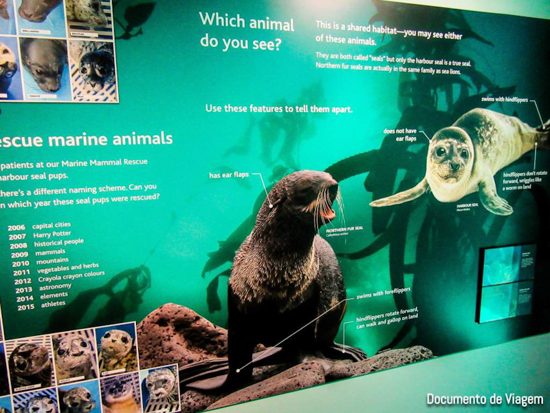 Vancouver Aquarium atrações