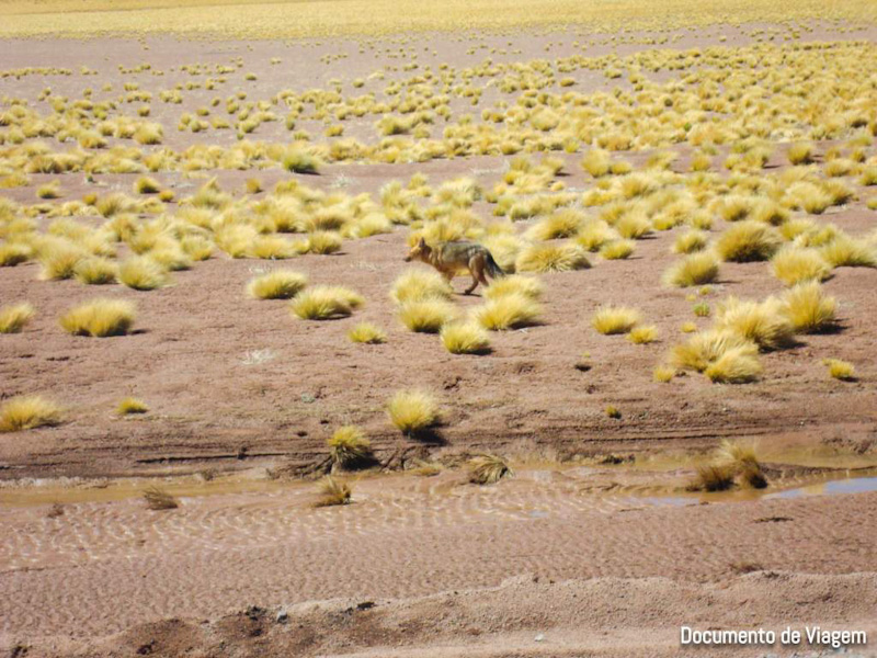 Salar de Atacama altitude