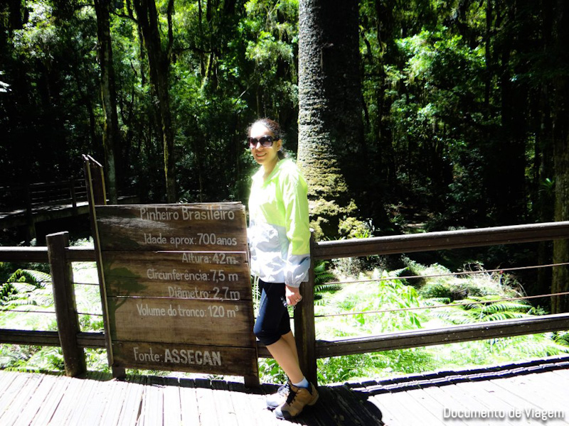 Parque do Pinheiro Grosso