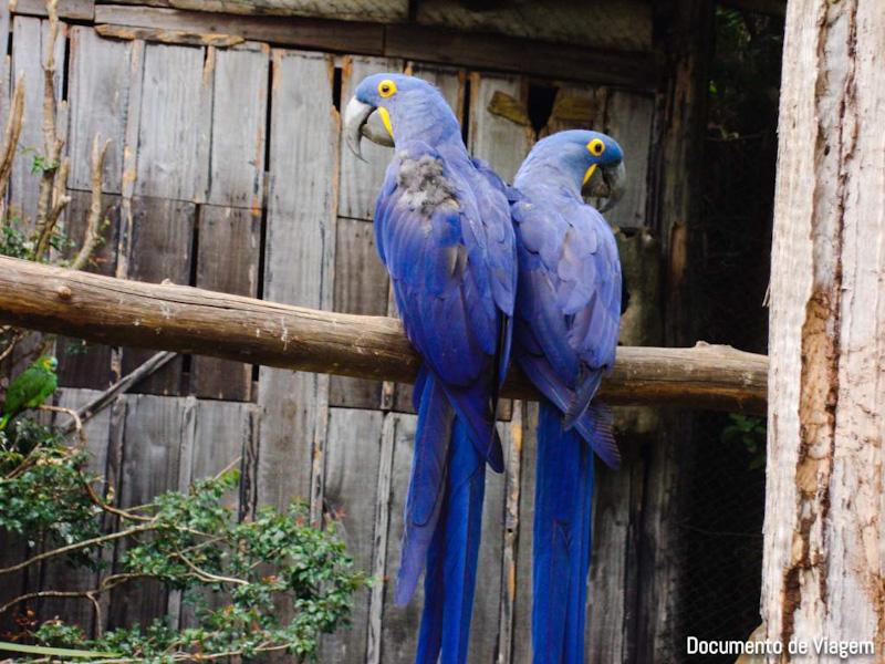 Gramado Zoo animais