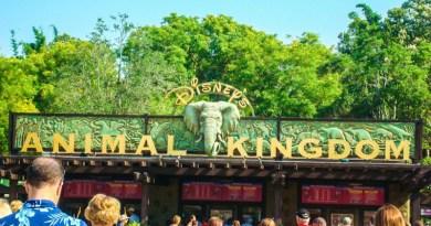 Disney's Animal Kingdom Orlando