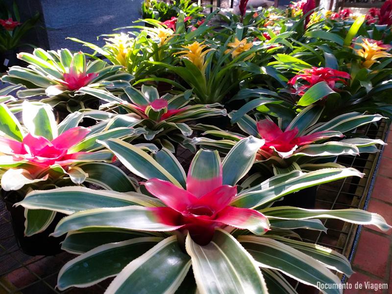 Flora Paraty