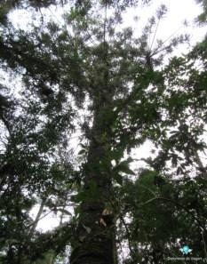 documento-de-viagem-monte-verde-trilha-pinheiro-velho-5