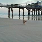 dog stroll on Daytona Beach