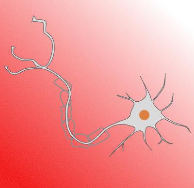 axon-nerve-healing.jpg?fit=400%2C388&ssl=1