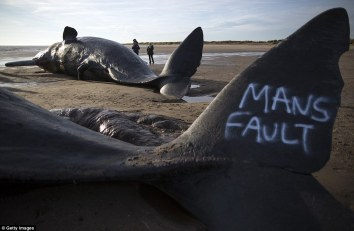 308FF83900000578-3417179-Graffiti_has_been_sprayed_on_the_bodies_of_two_of_the_whales_on_-a-6_1453835034325