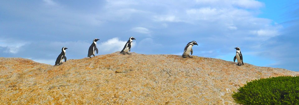 Feelings Follow