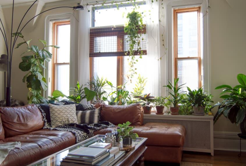 Ambiente de estar com plantas na decoração