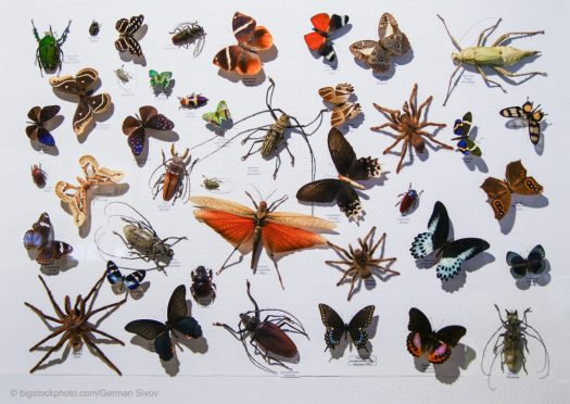Migrating Insects - Arthropods