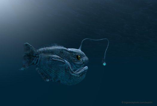 Deception in Politics, Religion, and Anglerfish