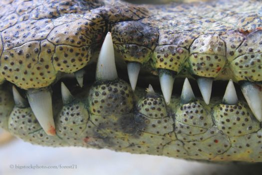 Ancient Animal Butchering Is a Croc