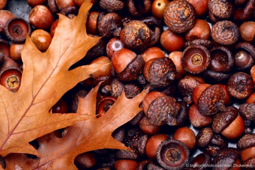 Oak Tree Rodent Control