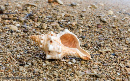 Mollusk Designs