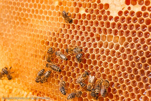 Honeybee Engineering